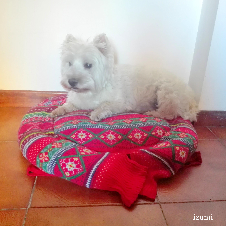 Idee Cucce Per Cani come riciclare un vecchio maglione per realizzare una cuccia